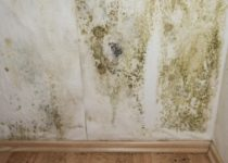 What Is the Best Mold Resistant Paint